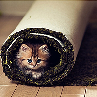Грязезащитные ковры для дома